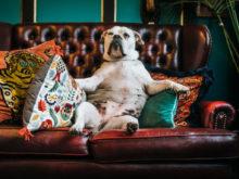 Pes na sedačce